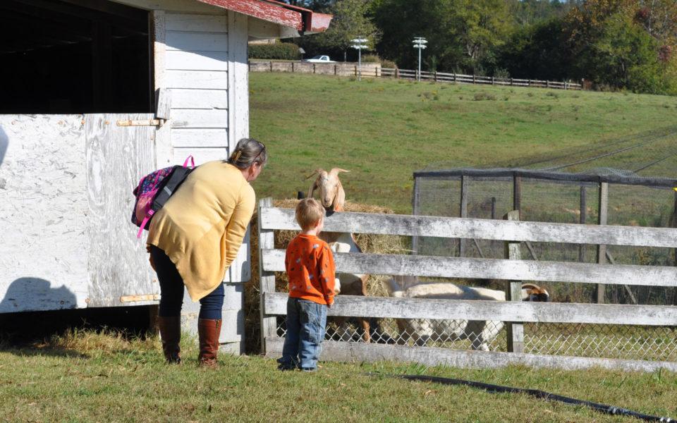 Fun on the Farm with Duke Memorial Weekday School , Durham, NC